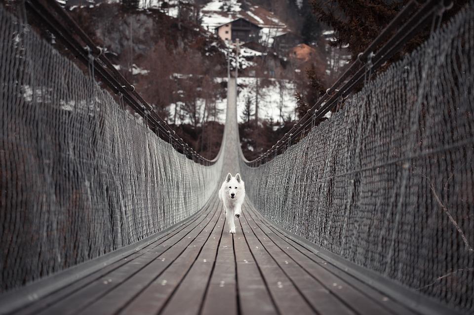 Jelenlét Tudatosság Kurzus a Kutyáddal